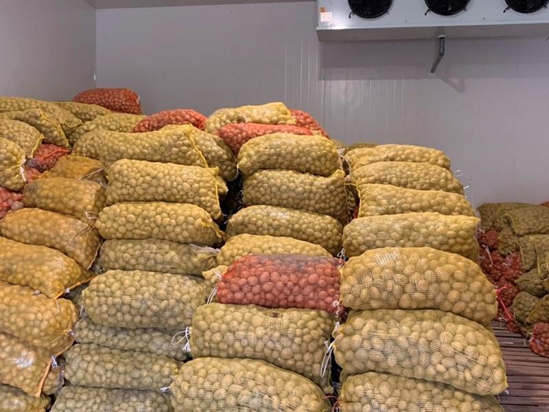 lắp đặt kho lạnh bảo quản khoai tây giống cho ngành nông nghiệp